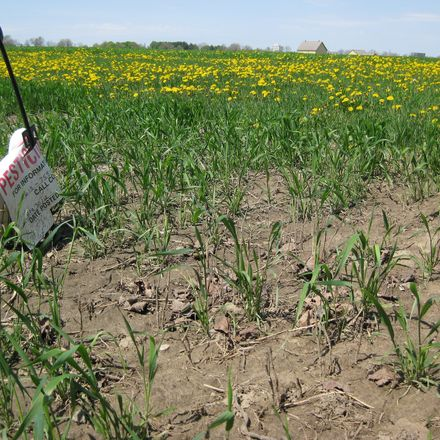 field with pesticides