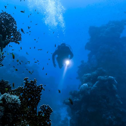 diver with flashlight shutterstock 602516156
