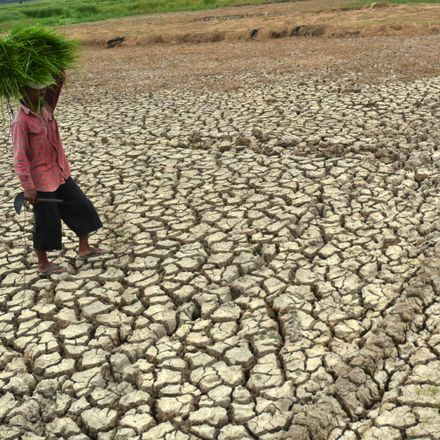 A farmer in Java, Indonesia, walks through drought-parched rice fields.