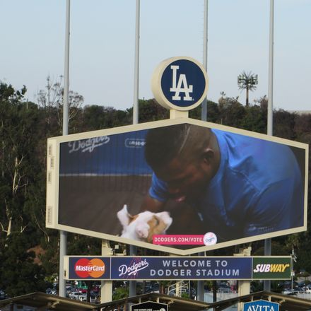 la dodgers yasiel puig playing with puppy on screen ken lund flickr share alike