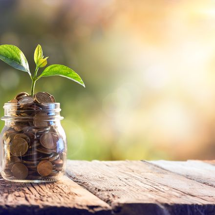 money plantshutterstock 365284043