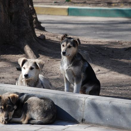 stray dogs pups