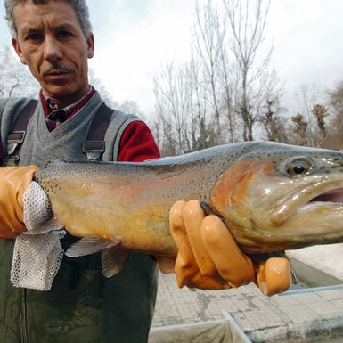 The Scotsman Who Imported 'Imperial Trout' to Kashmir