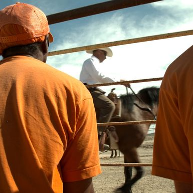 The Wild Ones: A Special Series on Prisoners and Horses