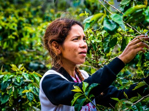 The World's Next Coffee Powerhouse Is Not What You Think