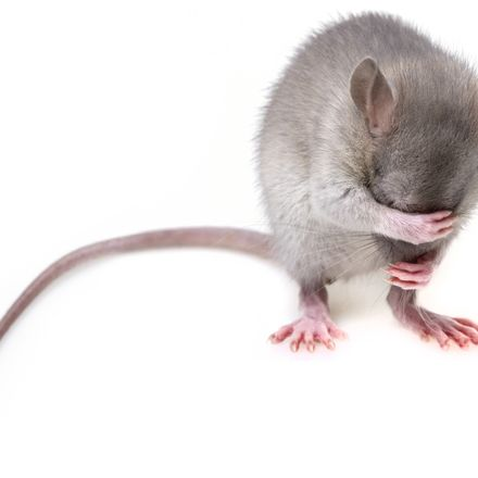 mouse shutterstock 174794720