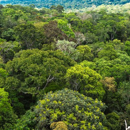 Amazon Forest Brazil shutterstock 318520775