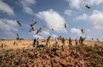 Pakistan Faces a New Threat: Locusts