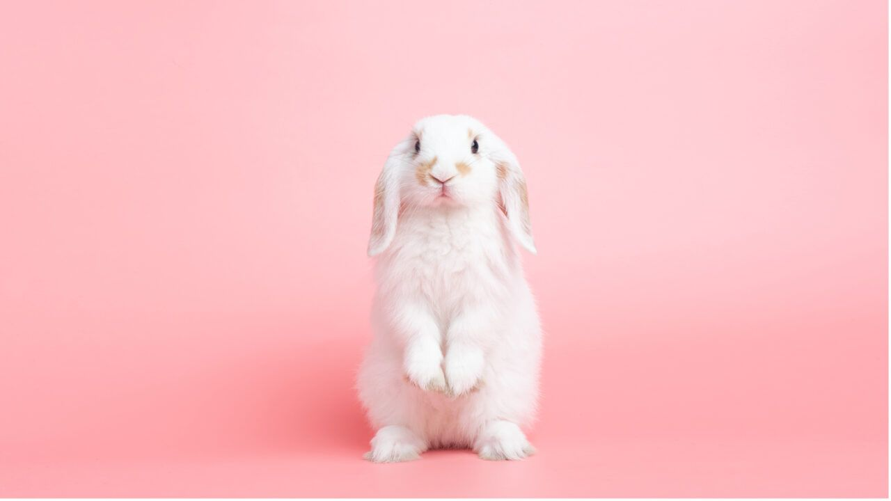 Are Bunnies the Secret to Curing Cancer?